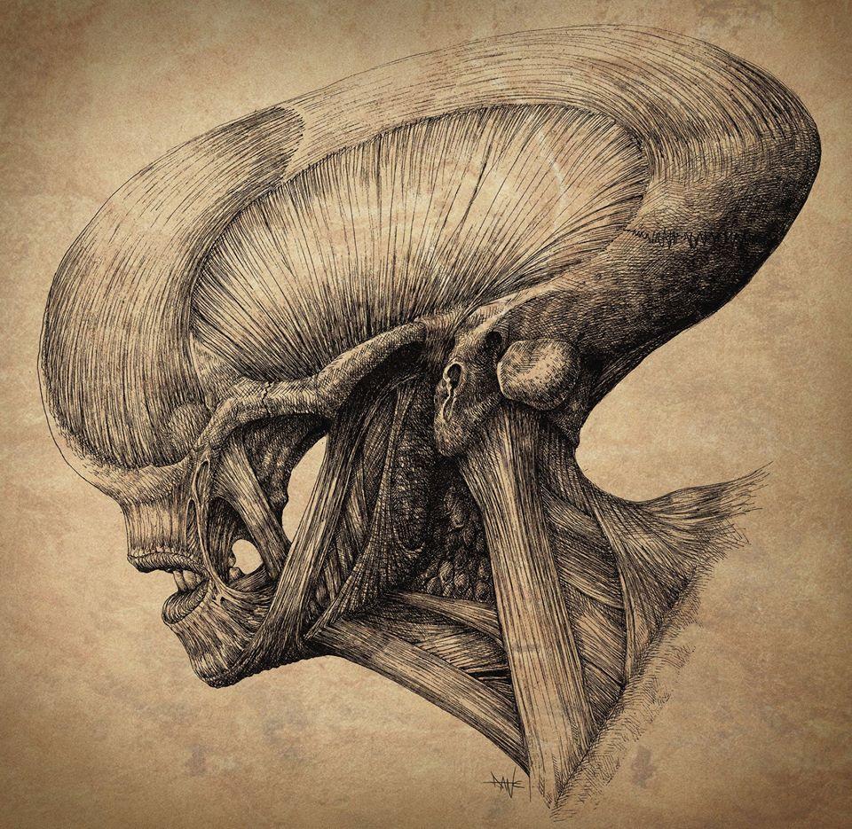 Dane Hallett - Alien Covenant (02)