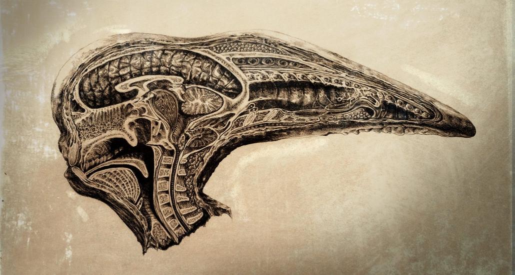 Dane Hallett - Alien Covenant (06)