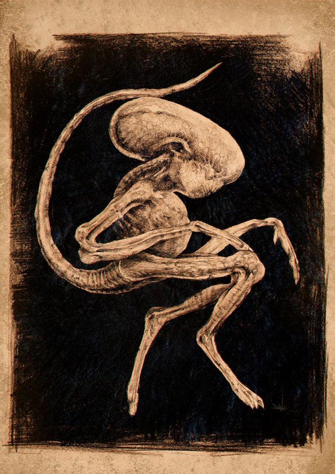 Dane Hallett - Alien Covenant (12)